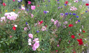 Colourful flower bed near Glasgow University