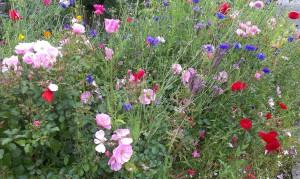 Colourful flower bed near Glasgow University